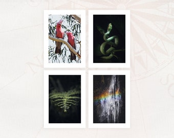 Lot of 4 cards to choose from Photographs 13x18 cm with white borders Limited editions