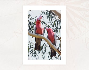 """""""GALAHS"""" map Photography 13x18 cm with white borders Limited Edition"""