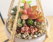 Tiny Succulent Pot, Mini Succulent Desk Garden, Mini Succulent Planter, Tiny Succulent Arrangement, Cute Succulent Gifts, Plant Gift for Mom