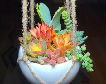 Hanging Live Succulent Arrangement, Small Colorful Succulent Pot, Potted Succulents, Succulent Gift,  Small Hanging Live Succulent Planter