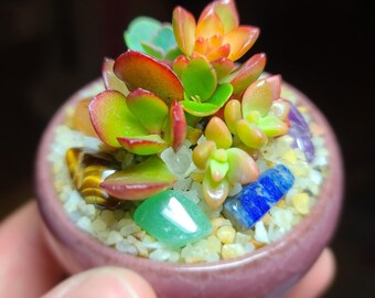 Mini Succulent Chakra Crystal Planter, Healing Chakra Crystal Set, Succulent Arrangement with Tiny Genuine Crystals Succulent Crystal Gifts