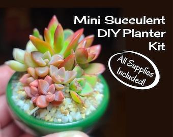 DIY Live Mini Succulent Kit Garden Activity, Tiny Succulent Planter Arrangement, Tiny Succulent Pot, Mini Succulent Gift, Tiny Plant Gifts