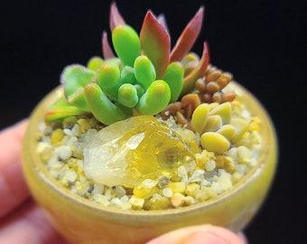 Succulents & Crystals