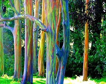 Rainbow Eucalyptus Etsy