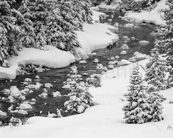 winter  creek  kananaskis country  kananaskis  black and white  Kananaskis Winter Creek Photo Print 8 x 12-16 x 24