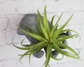 Wall Reaching Hand Air Plant Holder Style F