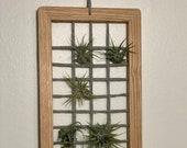 Large Wall Hanger Air Plant Frame, handmade, wall décor, air plant holder, wood frame, oak wood