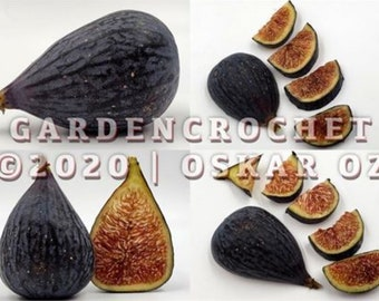 Fig Tree Cuttings YOU PICK Varieties GardenCrochet Fig Orchard FIGS