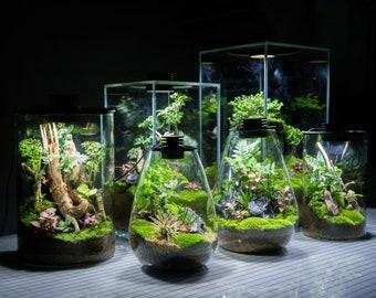 Bio Bottles Emerald Garden Mini Desktop Terrarium