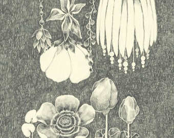 Flower, Plants, Night of the flora, Flora, Botanical, Postcard, A5, Pencil, Drawing