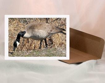 Photo Art Cards - Canada Goose - 8 Cards - Blank Inside