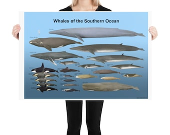 Whales of the Southern Ocean poster
