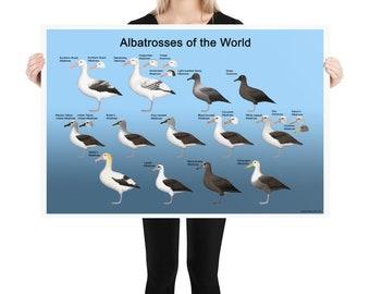 Albatrosses of the World poster