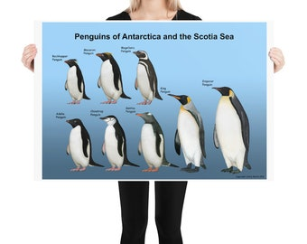 Penguins of Antarctica and the Scotia Sea poster
