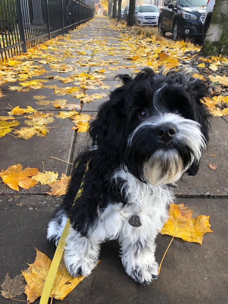 Leo dog charm and horoscope July 22 - August 22