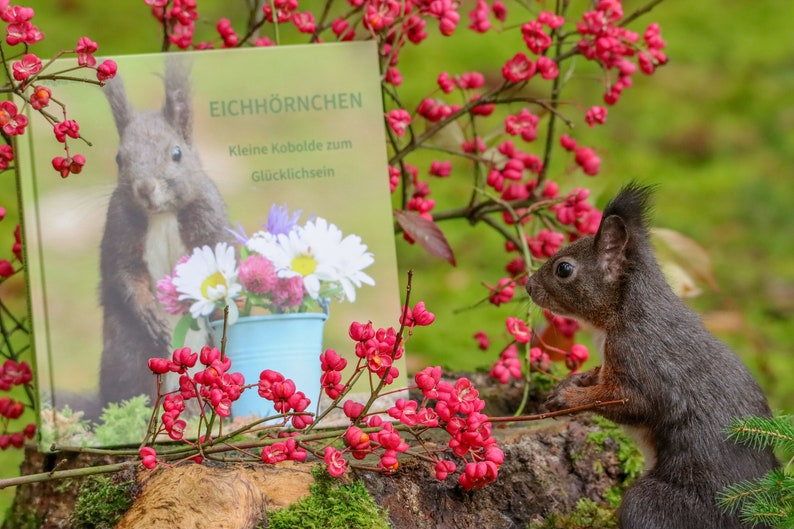 Squirrel  Little goblins for happiness a great photo gift image 0