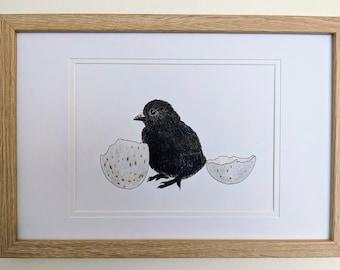 Tasmanian Native Hen Chick Baby Bird Art A5 Print