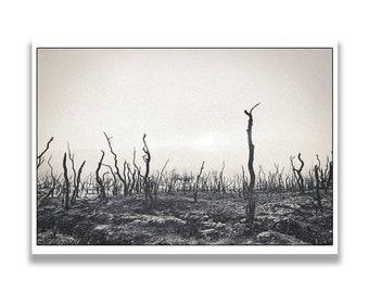 Desert digital painting print