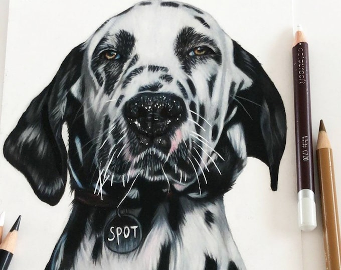 Spot | Dog portrait drawing