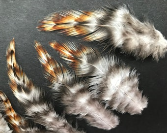 24 colorful craft feathers from the naked neck chicken, 7-10 cm, feathers, natural feathers, Indian feathers, decorative feathers, carnival, carnival (O6)