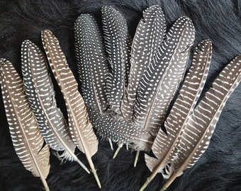 10 swing feathers,species-appropriate posture,15-24 cm,wing feathers,Flügdl feathers,guinea fowl feathers,guinea fowl,leidfrei (B12)