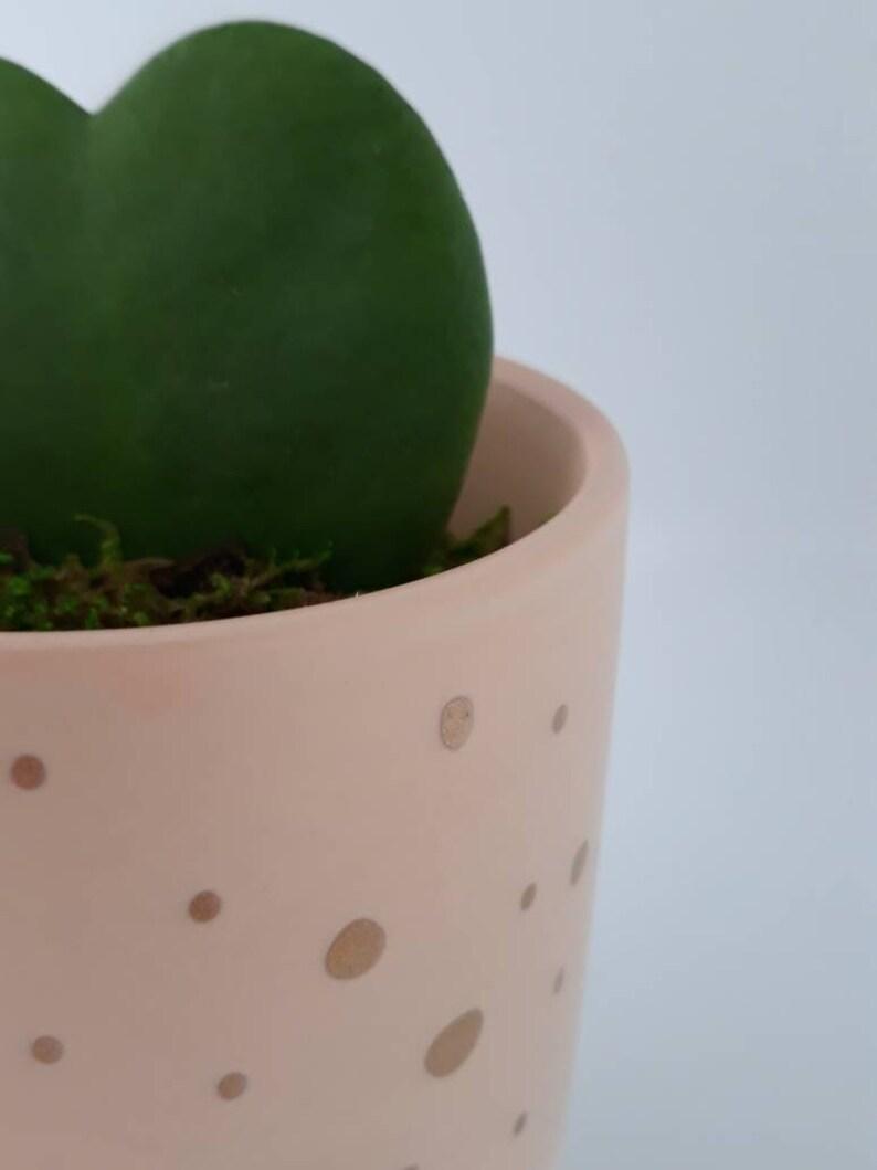 Heart Hoya Plant Unique Succulent Birthday Gift Home Decor Gift for Mom Hoya Kerrii Best friend gift Gift for Him Indoor Plant
