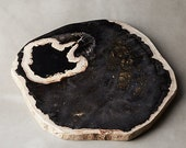 Petrified Wood Cheese Board | Indonesian Serving Board Kitchen Decor
