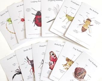 Anatomy Cards - Crawlies