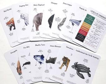 Anatomy Cards - Endangered Animals