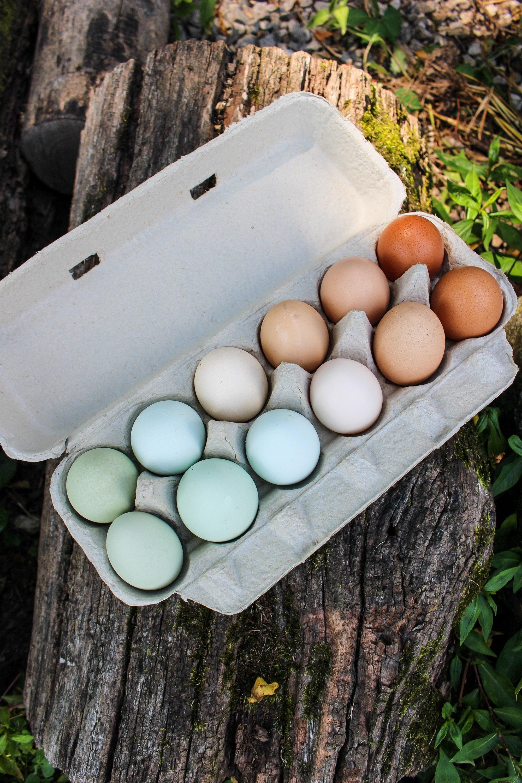 Farm Fresh Rainbow Chicken Eggs, Free Range Eggs, Silkie Eggs