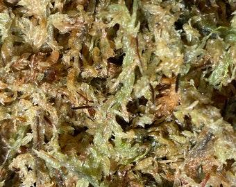 Dischidia Imbricata Mounted on Hanging Cypress Board