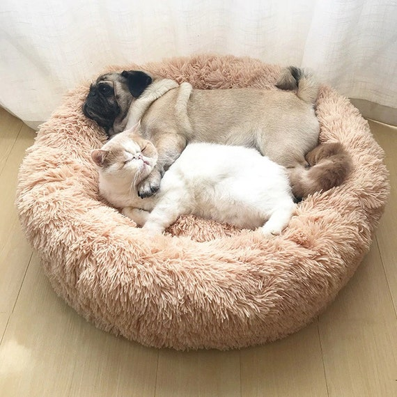 Cute Super Soft Dog Bed, Sofa Fluffy Cat, Dog Beds For Large Dogs Bed