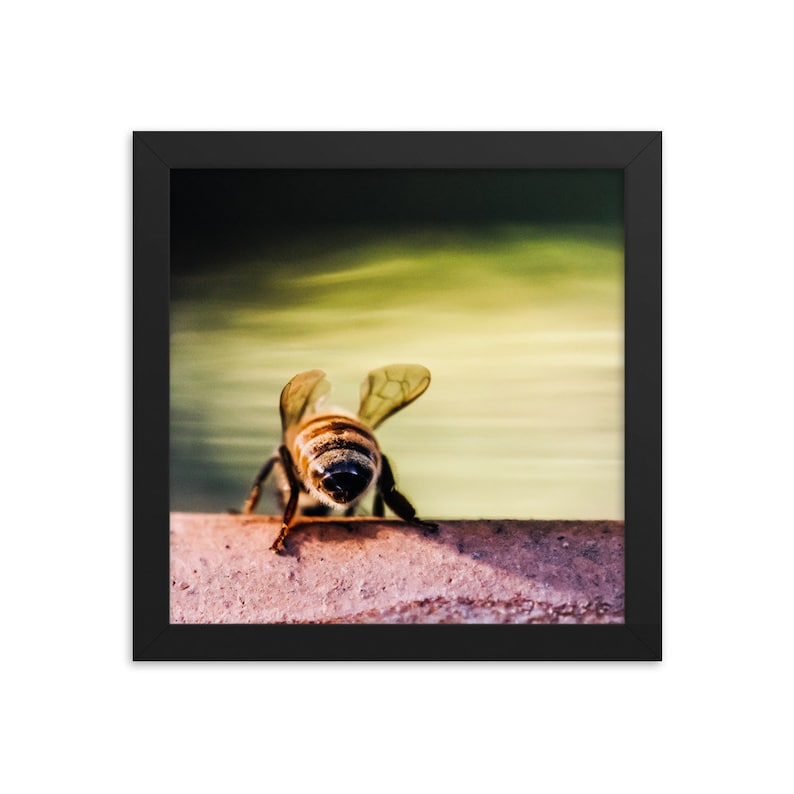 10x10 framed photo poster  Drinking Bees 4 image 0