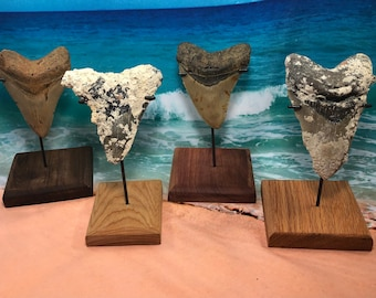 Custom Inverted Upright Metal Stand in Handcrafted Wood Base—-For Fossil Megalodon Shark Tooth Display Home Decor Decoration