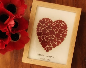 Heart of hydrangea
