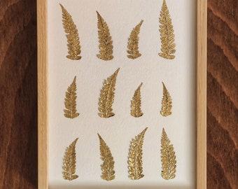 gold fern herbarium