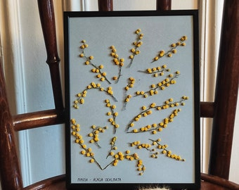 Herbier mimosa, under glass