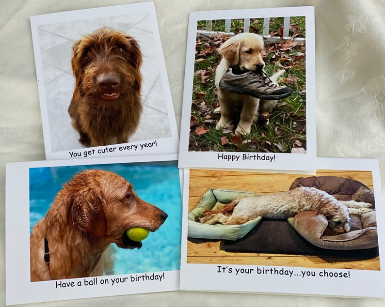 Golden Retriever Photographic  Greeting Cards image 1