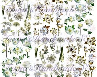 White printable fussy cut digital flowers