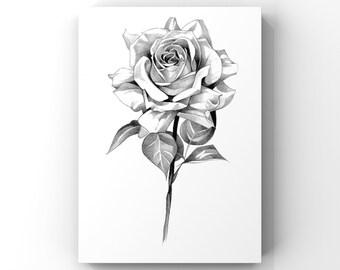 Rose / flower pencil drawing art print A4 (unframed)