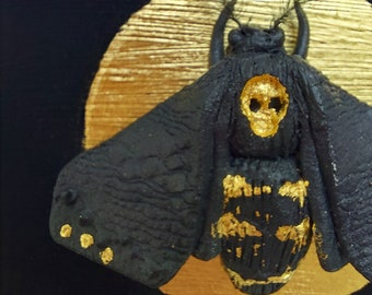Deathshead hawkmoth with gold circle