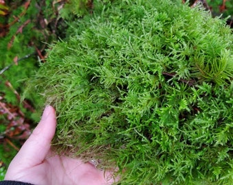 Fresh, sustainably harvested mosses from the Pacific Northwest