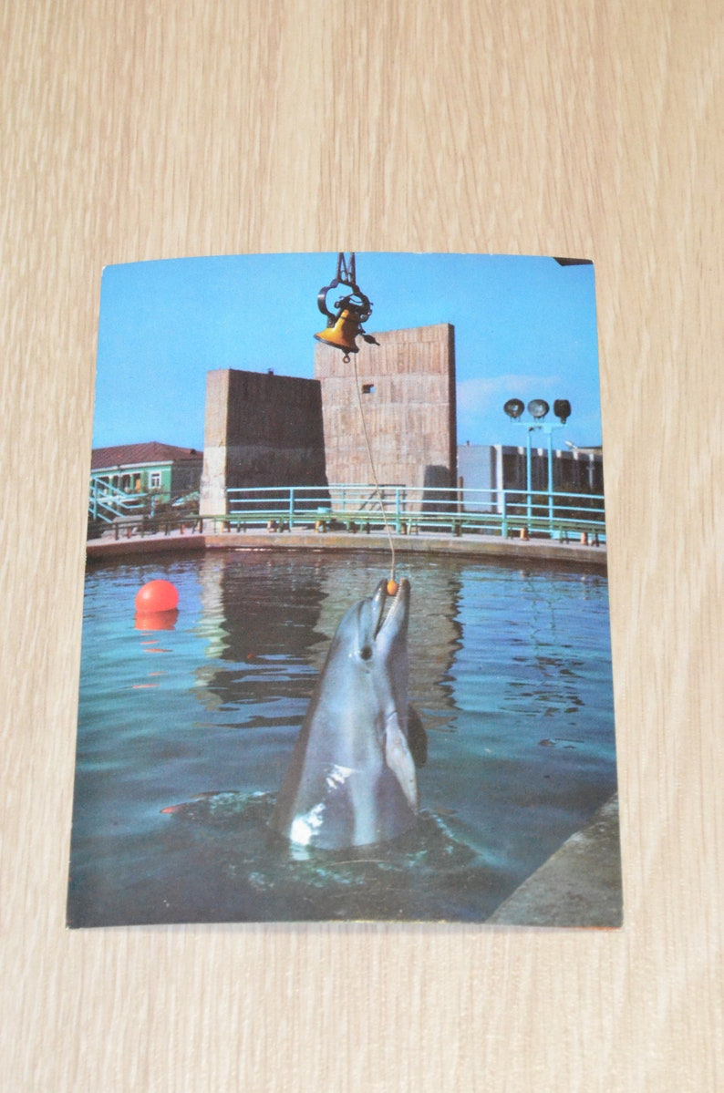 diving with dolphins in the USSR.rarity russian card Georgia Soviet poto postcard vintage 1980 Batumi Dolphins Set 18 postcards.1980