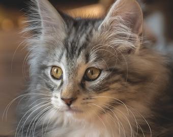 Wooden puzzle - Ragnar - the Norwegian kitten