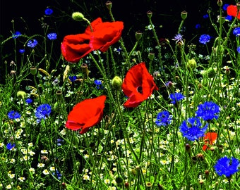 """Wooden puzzle """"Poppy Meadow"""" , Whimsy puzzle"""