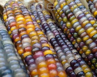 Glass Gem Corn~Organic~Gem Corn~Made in USA~Minnesota Grown~Unique~Decorative Corn~Corn~Non-GMO~25 seed packet