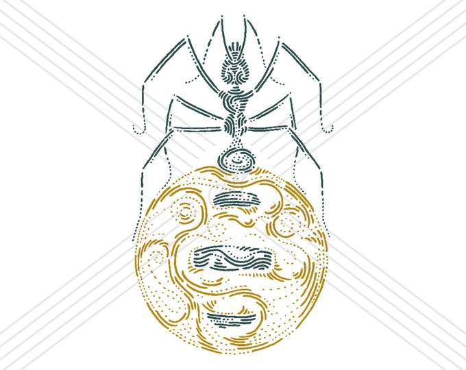 Honeypot ant #2 · Hand-drawn vector illustration