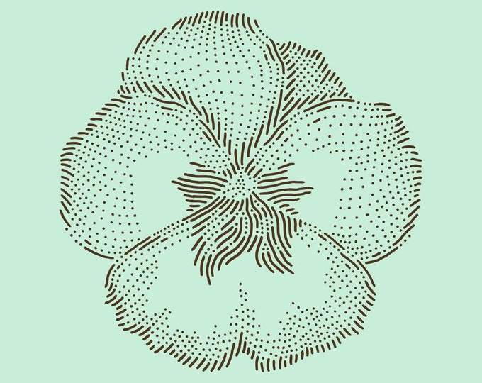 Viola pansy · Hand-drawn vector illustration