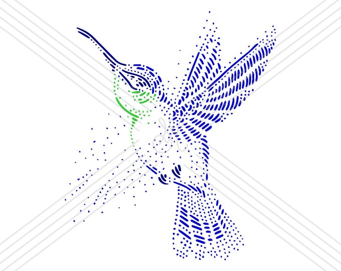 Hummingbird · Hand-drawn vector illustration