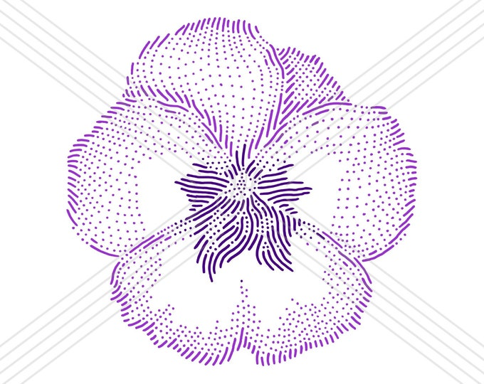 Viola pansy · Hand-drawn vector illustration